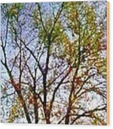 Sun Dappled Wood Print by Dale   Ford
