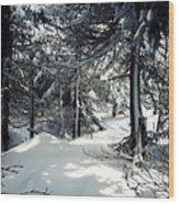 Sun Dappled Snow Wood Print
