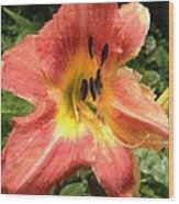 Sun Day Lilly  Wood Print