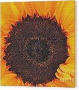 Sun Delight Wood Print