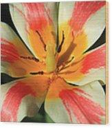 Flower Of Velvet Wood Print