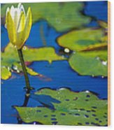 Sun Drenched Lilly  Wood Print