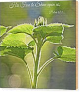 Sun Drenched Sunflower With Bible Verse Wood Print by Debbie Portwood