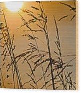 Sun Flood Wood Print