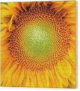 Sun Flower Power Wood Print