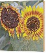 Sun Flowers Wood Print