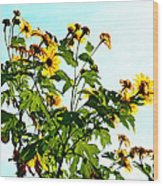 Sun Flowers In The Sun Wood Print