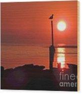 Sun Gull Wood Print