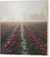 Sun In Fog And Tulips Wood Print