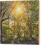 Sun In The Autumn Forest Wood Print