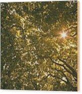 Sun In The Trees Wood Print