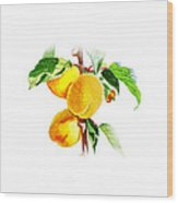 Sun Kissed Apricots Wood Print