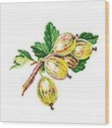Sun Kissed Gooseberries Branch Wood Print