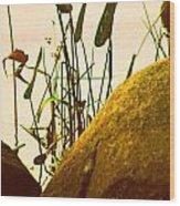 Sun Kissed Grass And Rocks   Wood Print