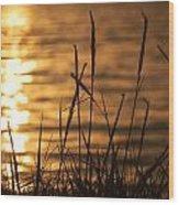 Sun Kissed  Wood Print
