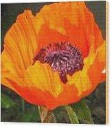 Sun-kissed Poppy Wood Print
