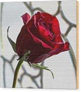 Sun Kissed Rose Wood Print