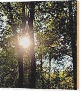 Sun Kissed Trees Wood Print