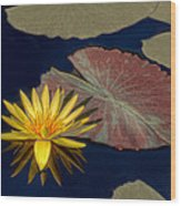 Sun-kissed Water Lily Wood Print