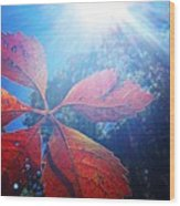 Sun Leaf Wood Print by Candice Trimble