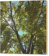 Sun Leaves Wood Print