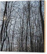Sun Lit Frozen Rain 2 Wood Print