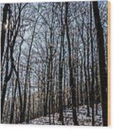 Sun Lit Frozen Rain 3 Wood Print
