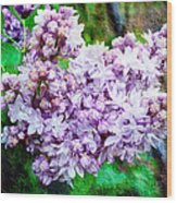 Sun Lit Lilac The Sweet Sign Of Spring Wood Print