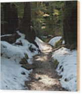 Sun Lit Trail, Olympic National Park Wood Print