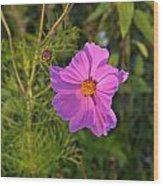 Sun Lit Wildflower Wood Print