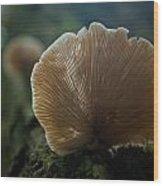 Sun On A Mushroom Wood Print