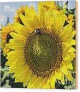 Sun On The Sunflower Wood Print