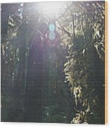 Sun Penetrates The Redwood Forest Wood Print