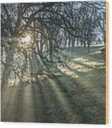 Sun Rays  On A Hillside Wood Print