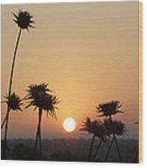 Sun Rise On Bethsaida Wood Print