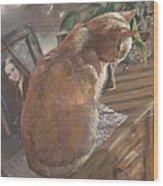 Sun Seeker II Wood Print