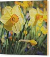 Sun Seeker Wood Print