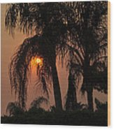Sun Setting Behind The Queen Palm Covered In Smoke Wood Print