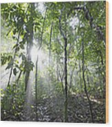 Sun Shining In Tropical Rainforest Wood Print