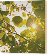 Sun Shining Through Leaves Wood Print