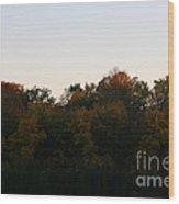 Sun Soaked Wood Print
