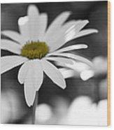 Sun-speckled Daisy Wood Print