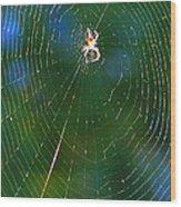 Sun Spider In Rainbow Web Wood Print