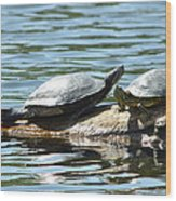 Sun Stretching Turtle And Youngster Wood Print
