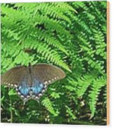 Sunbathing Butterfly Wood Print