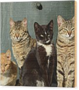 Sunbathing Cats Wood Print