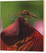 Sunbathing Dragonfly Wood Print