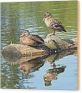 Sunbathing Mallards Reflecting Wood Print