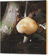 Sunbathing Mushroom Wood Print