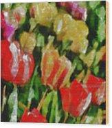 Sunbathing Tulips Wood Print